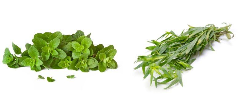 herbs: June